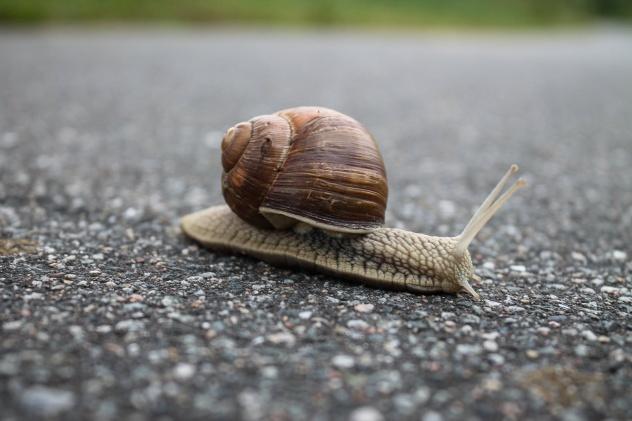 slow loading speed of wordpress website